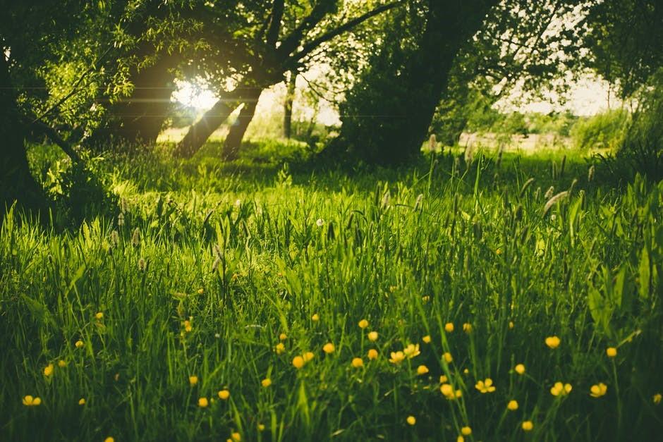 Sommaräng med högt gräs