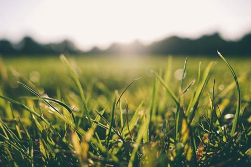 gräs-allergi