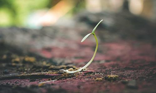 Liten växt kommer upp ur jorden
