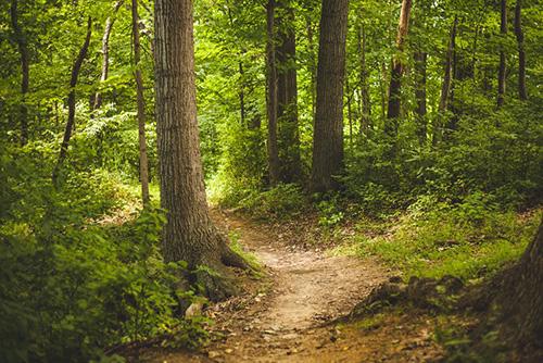 skog-natur