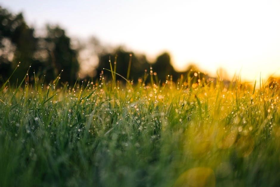 Sommaräng i sol