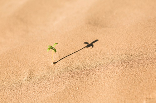 växt i sand