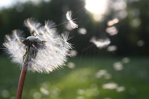 ont i halsen vid pollen