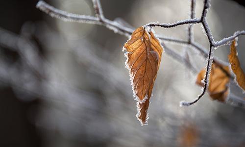 löv på vintern